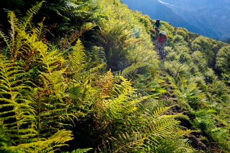 Photograph of two mountain bikers riding a trail surrounded by dense ferns, in Engelberg