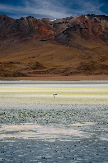 Photo of a flamingo in Salar de Uyuni