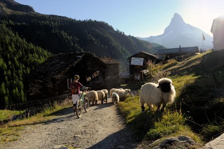 Lindby-Zermatt_RIK4785_small