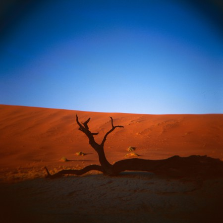 A fallen tree in the desert in Namibia.