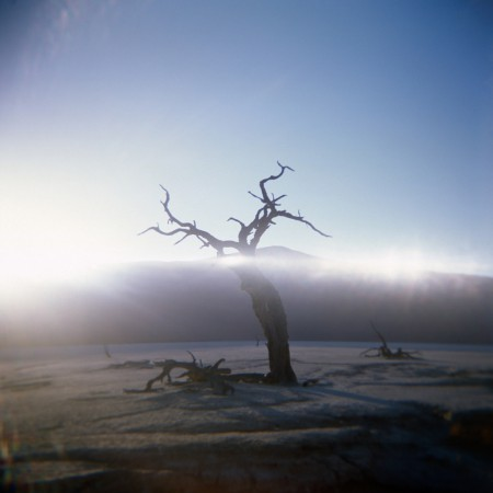 A single tree shot in Deadvlei on Kodak E100 showing some light leaks.