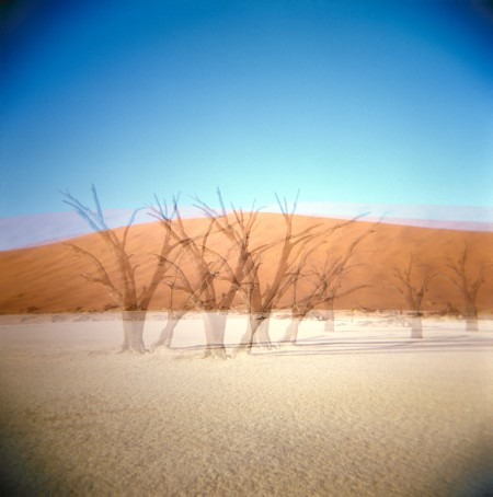 A row of trees in the desert close to Deadvlei.