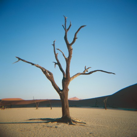 A single tree in Deadvlei shot with the Holga camera.